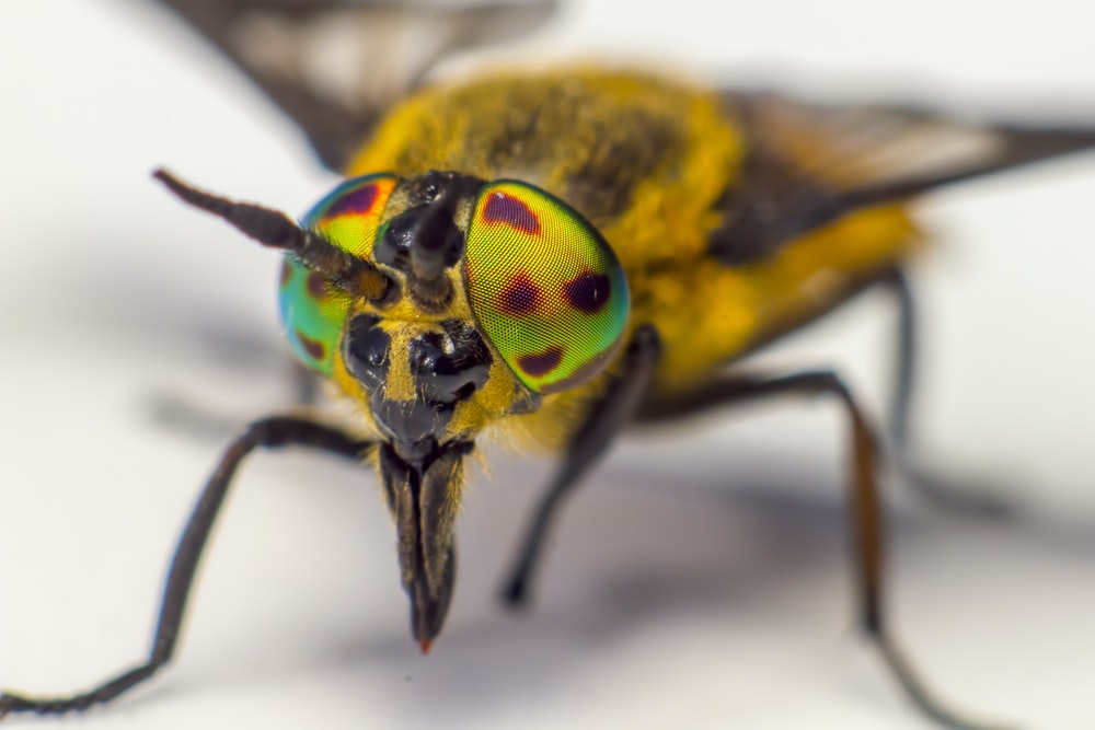 green and brown insect in close up photography