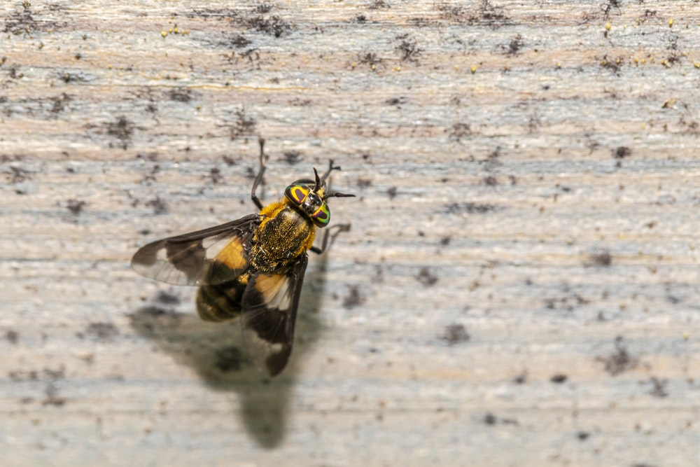 black and yellow bee on white textile
