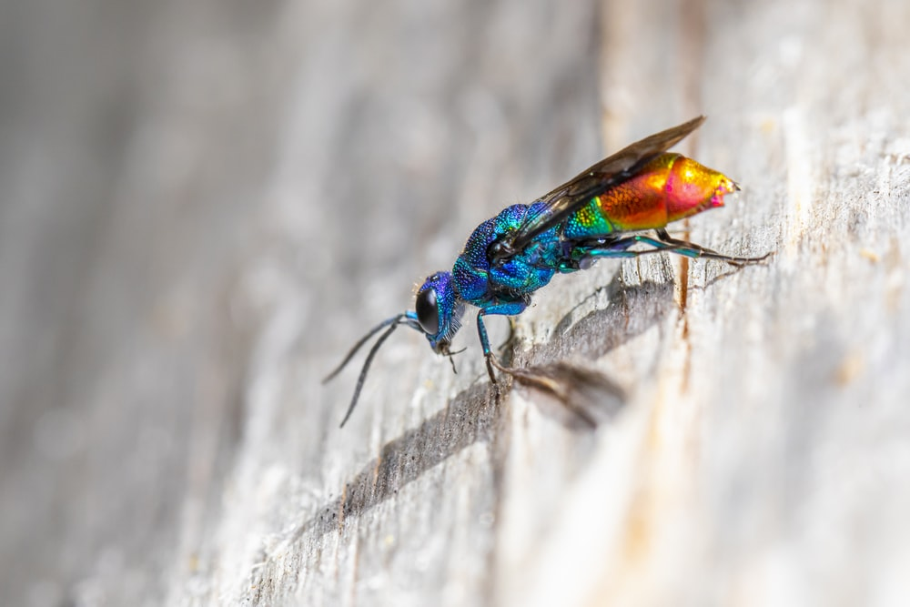 blue and green insect on white textile