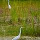 white bird flying over green grass field during daytime