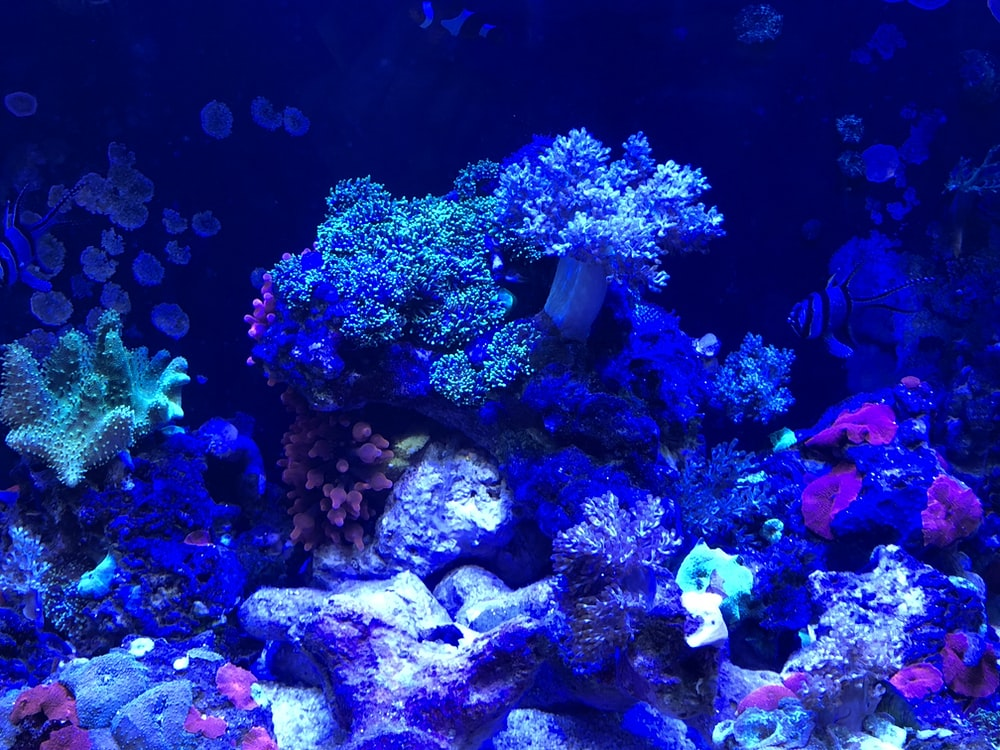 blue and green coral reef
