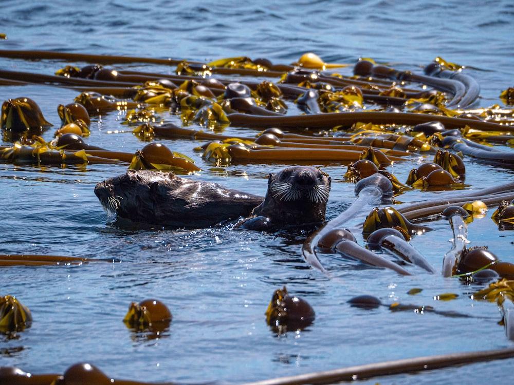 black sea lion on water during daytime