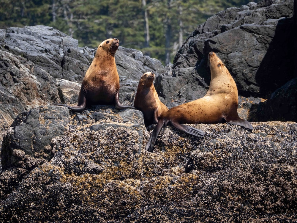 sea lion on rocky ground during daytime