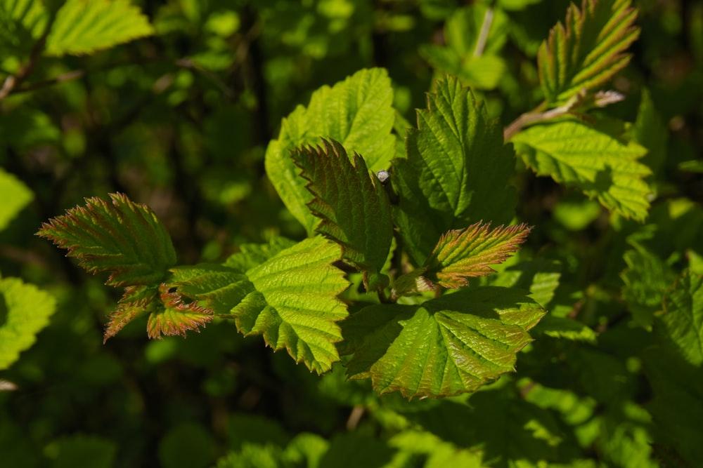 green and yellow leaf plant