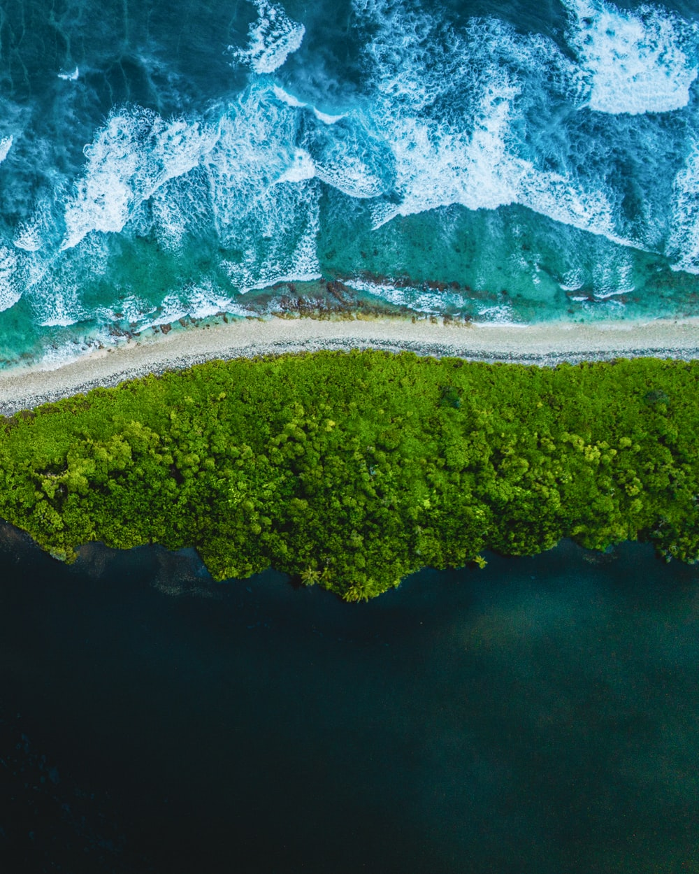 aerial view of green trees and lake