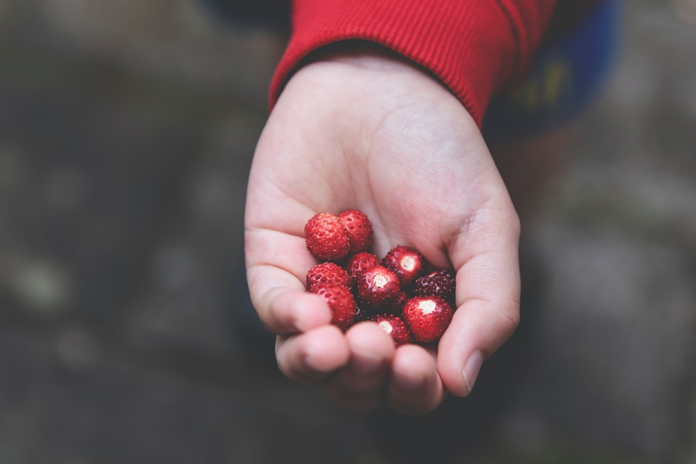red round fruits on persons hand