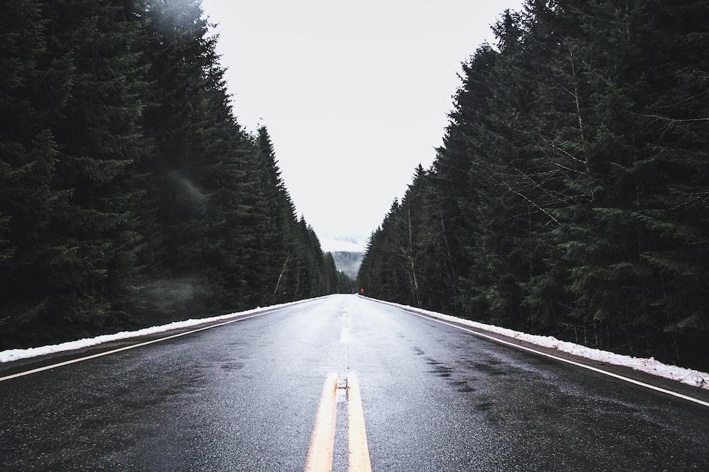 black asphalt road between green trees during daytime