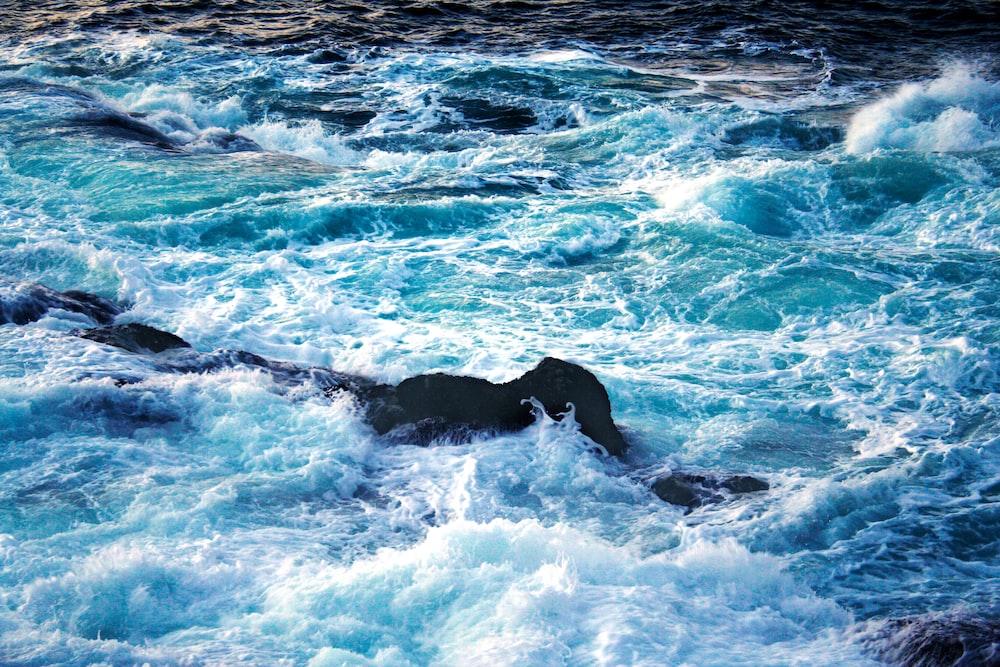 black labrador retriever on water