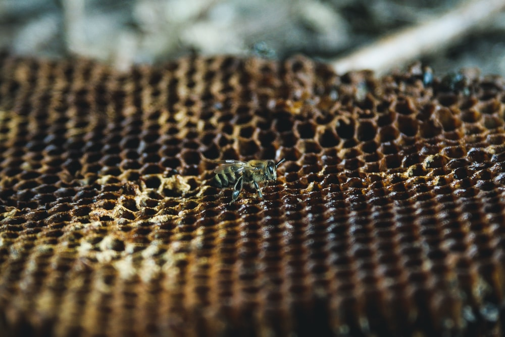 green and black insect on brown textile