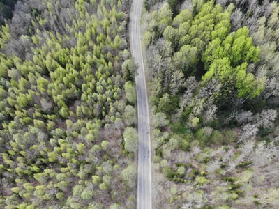 aerial view of green trees belarus zoom background