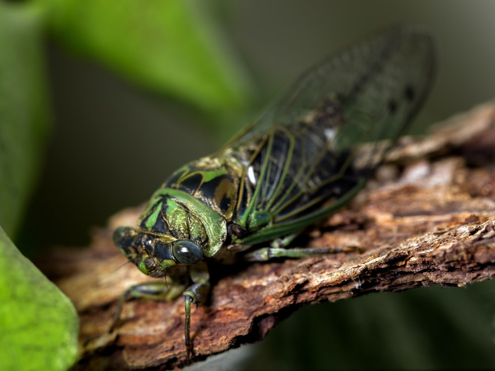 green and black insect on brown tree branch