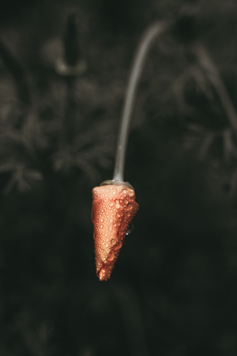 red fruit on stick with water dew