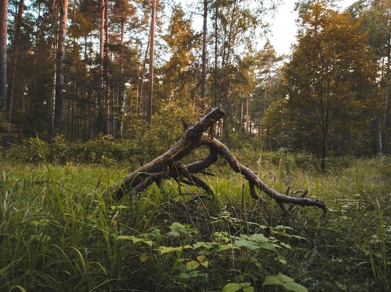 香氛筆記┃川久保玲 京都、液態創想 森林之噬、阿蒂仙 冥府之道、TDC 月影松香