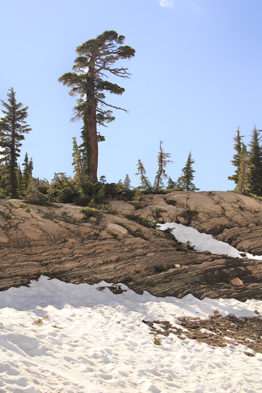 green pine trees on white snow covered ground during daytime