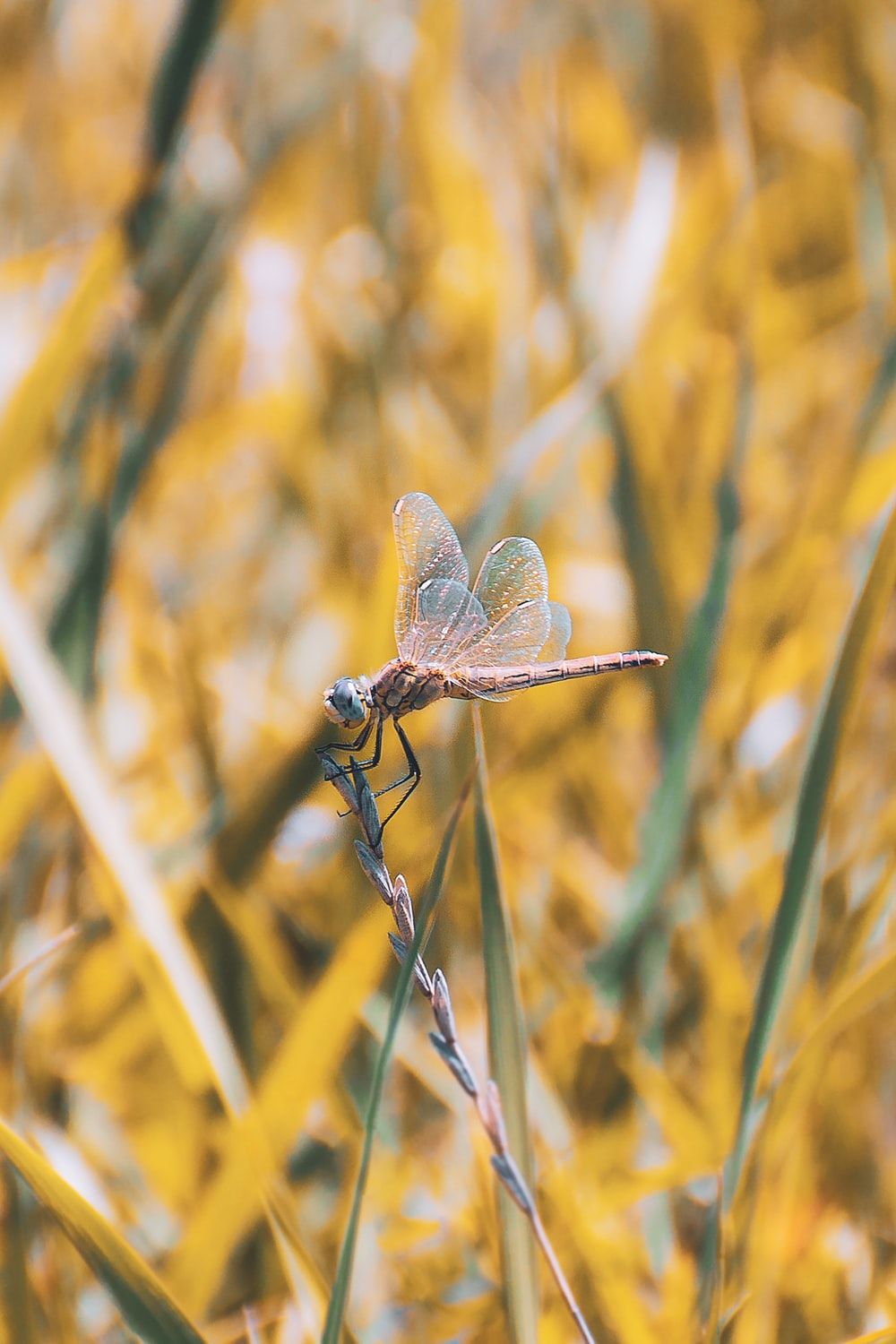 brown dragonfly perched on brown plant stem in close up photography during daytime