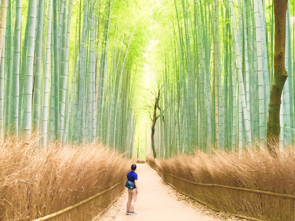 woman in blue shirt and black shorts walking on pathway between bamboo trees during daytime
