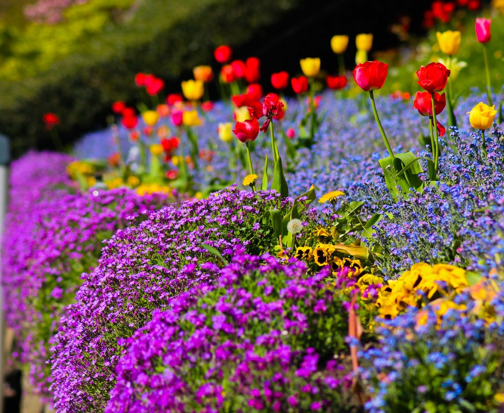 purple and red flower field during daytime