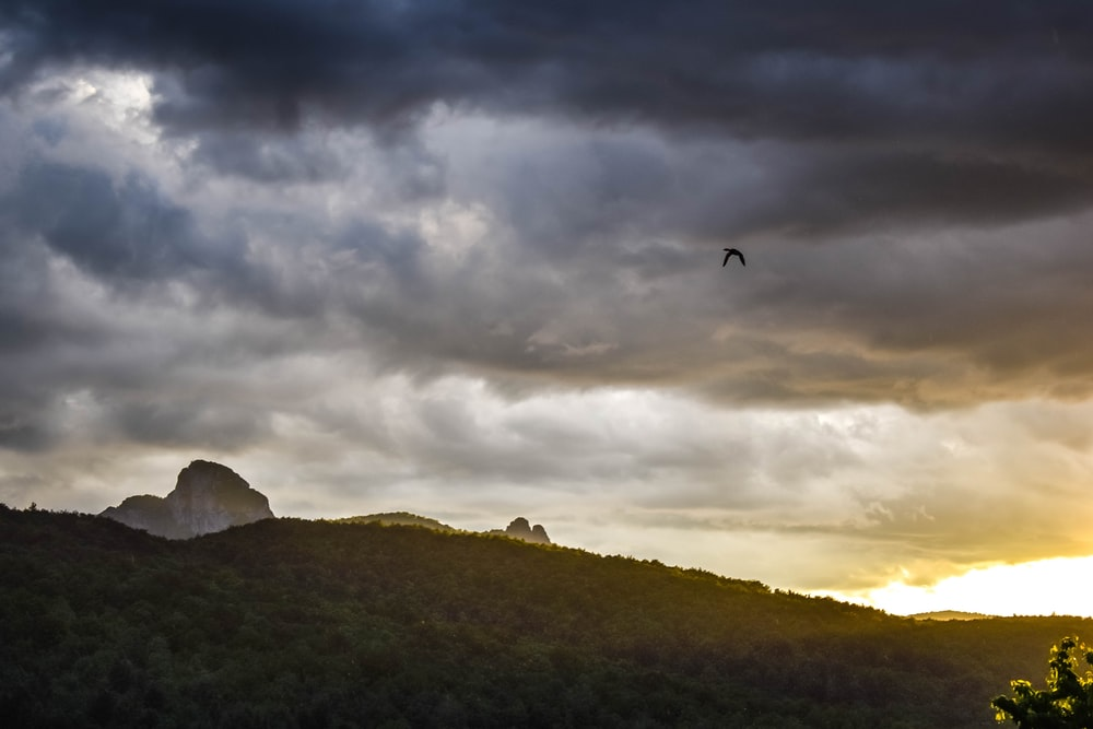 bird flying over green mountain under cloudy sky during daytime