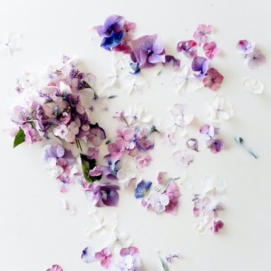 white and purple flower petals