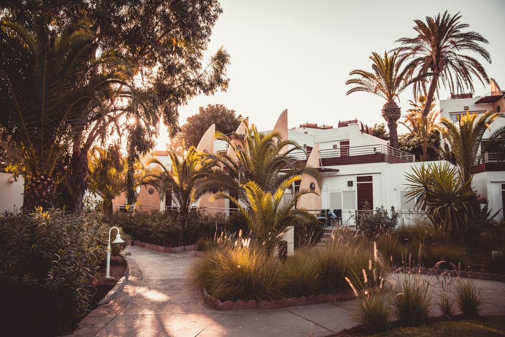 white concrete house surrounded by palm trees