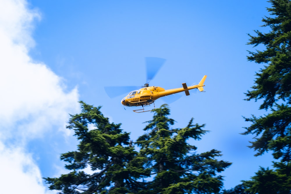 yellow and blue plane flying over green trees during daytime