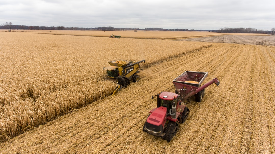 Harvest of corn in Southwest Michigan. This combine fills up the tractor and trailer with corn. The corn is delivered to a semi truck while the combine is able to keep on harvesting.