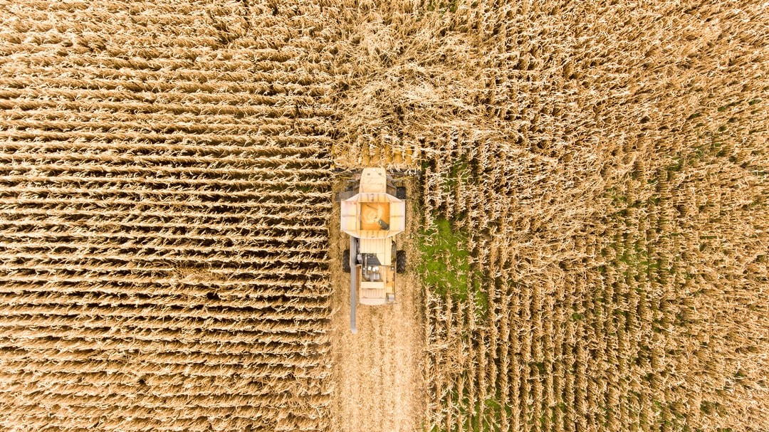 A farmer harvests corn using a combine driving through a field. The corn rows go different direction to show a boundary between corn types, treatment types, or simply based on the shape of the land.