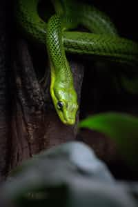 Snake                                                                  - Pragya haiku-for-animals stories