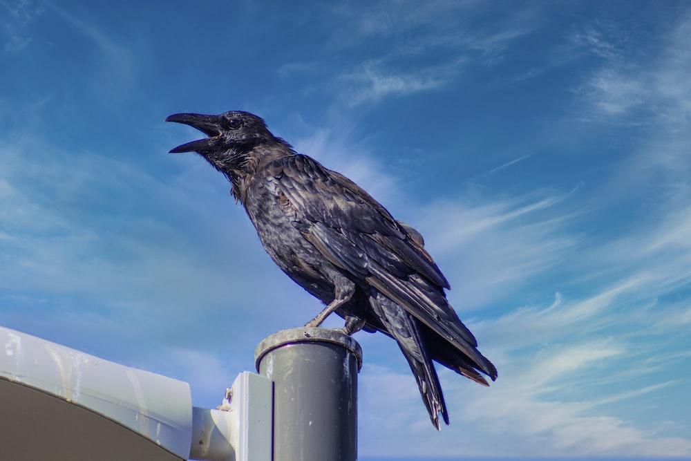 black bird on white metal bar during daytime