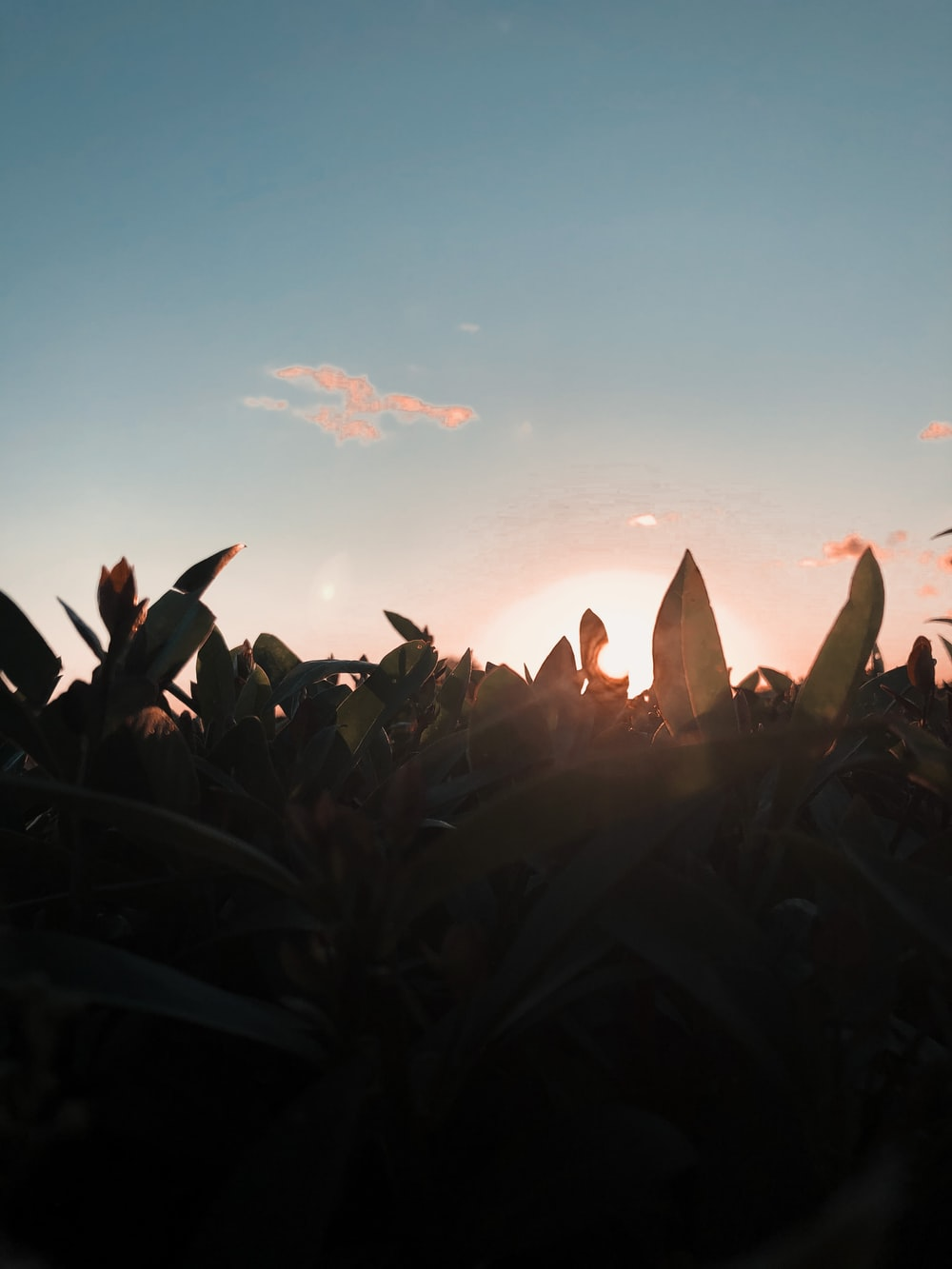 silhouette of plants under blue sky during daytime