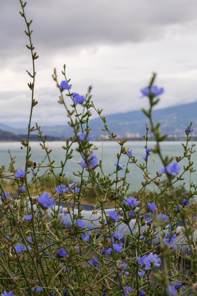 beautiful flowers at Lisi Lake