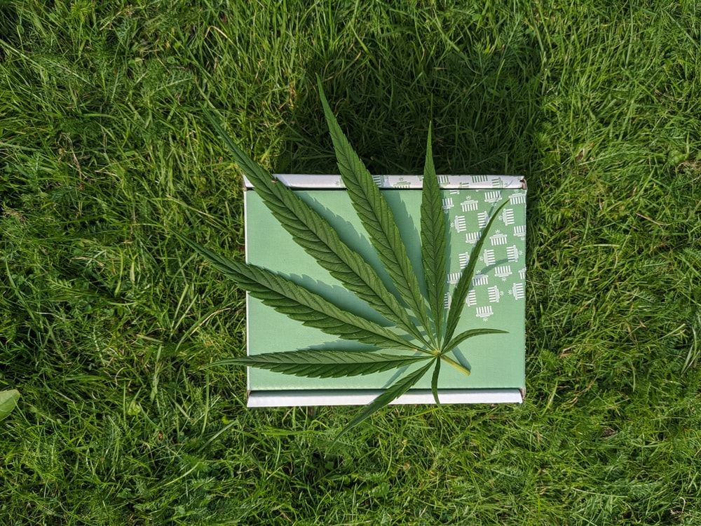 white and green book on green grass