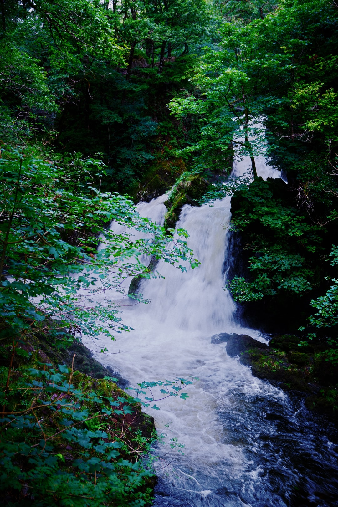 The roaring sound fills our bodies and then, up on a rocky ledge… Colwith Force.