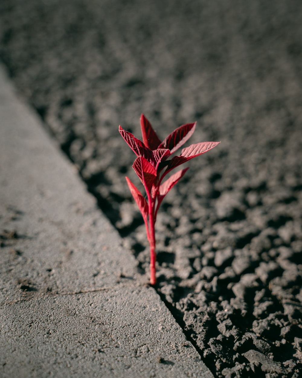 red leaf on gray concrete pavement