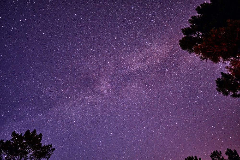 silhouette of tree under starry night