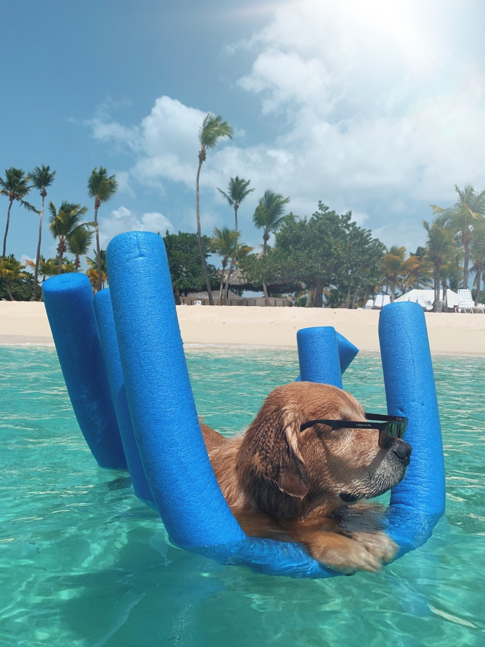 brown short coated dog in blue inflatable pool during daytime