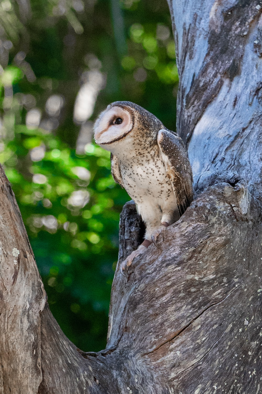 brown and white owl on brown tree trunk during daytime