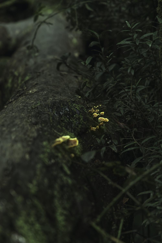 yellow flower on gray tree trunk