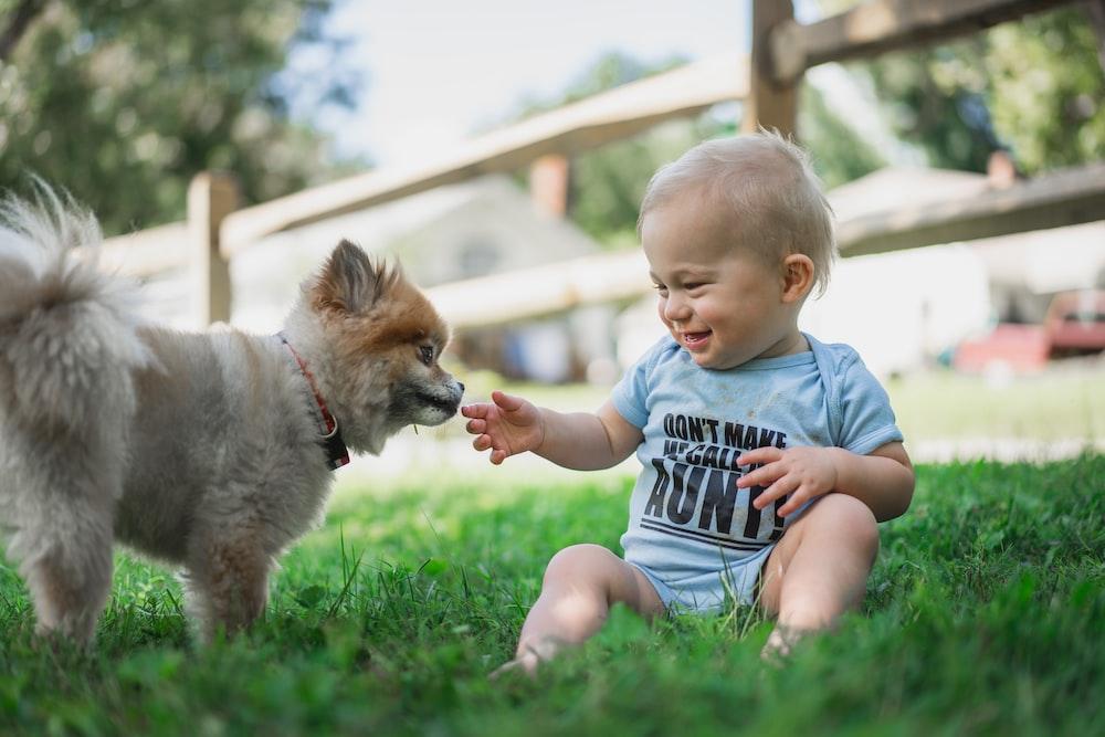 boy in black and white stripe shirt sitting on green grass field beside brown pomeranian puppy