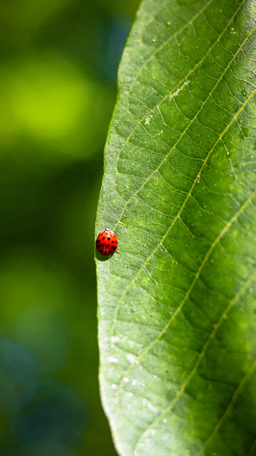 red ladybug on green leaf in close up photography during daytime