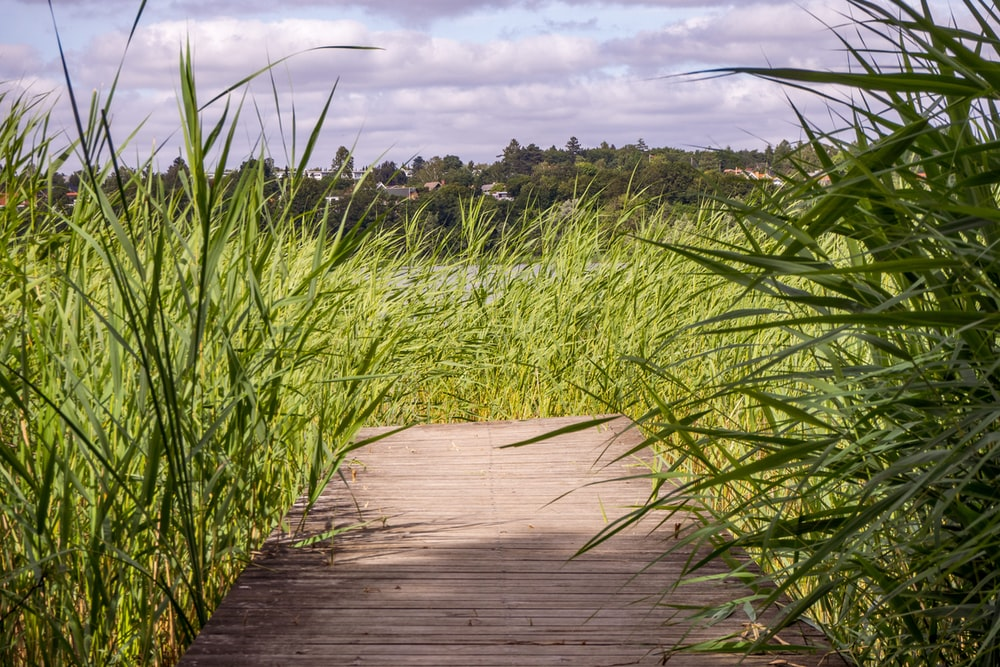 brown wooden pathway between green grass field under white clouds during daytime