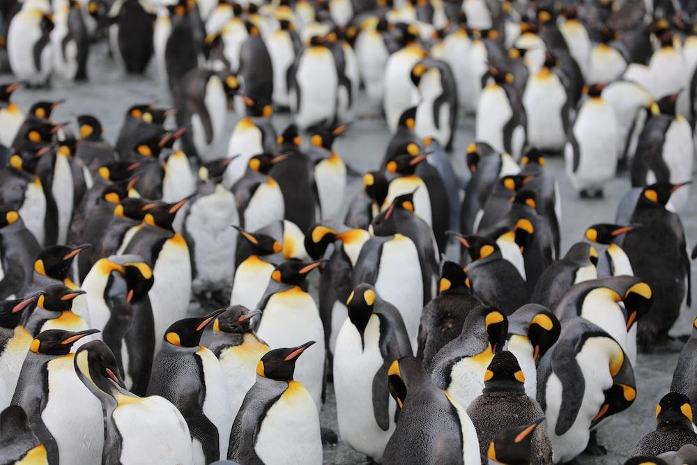 penguins on green grass during daytime