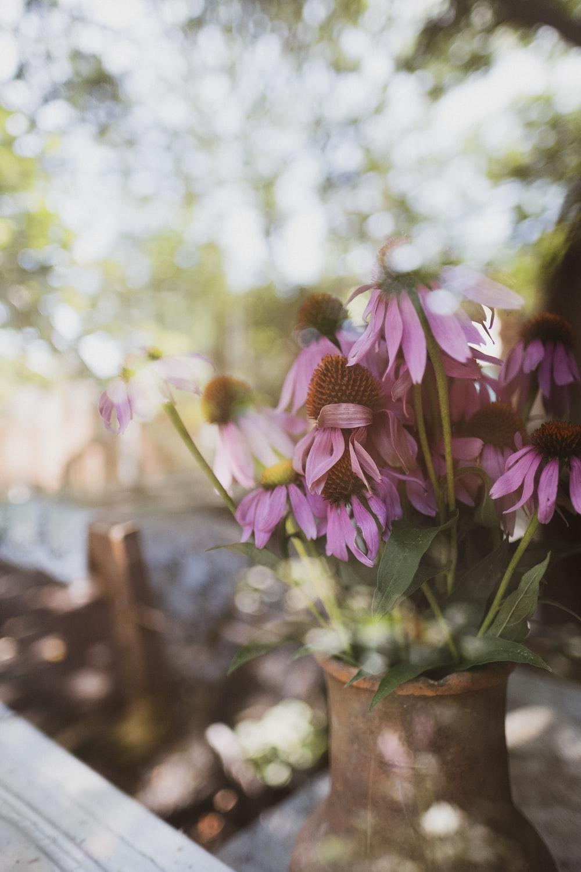 purple flower in brown clay pot