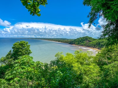 green trees near body of water under blue sky during daytime trinidad and tobago zoom background