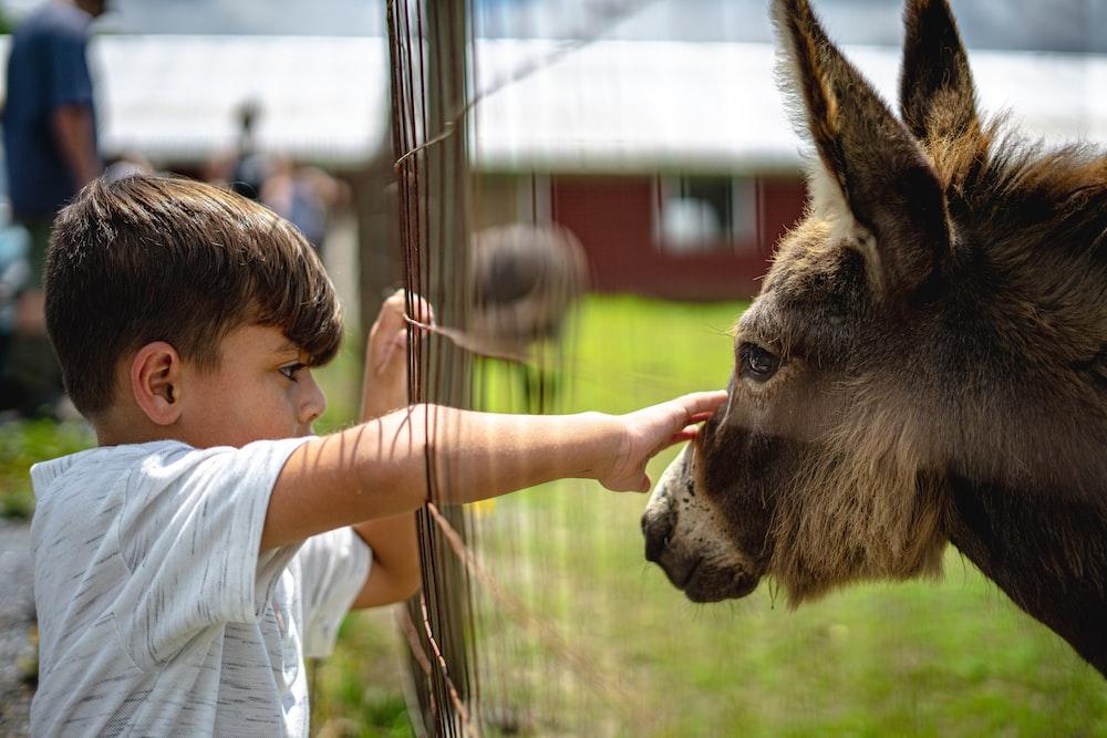 girl in white shirt feeding brown horse