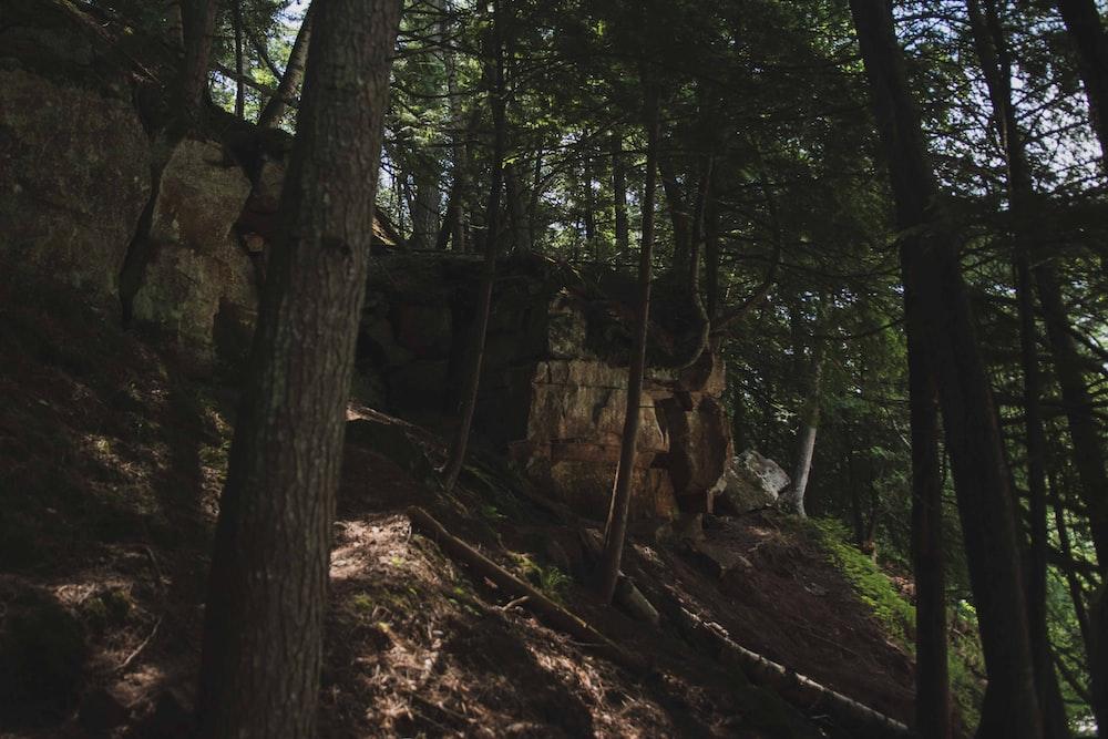 brown tree log on brown soil