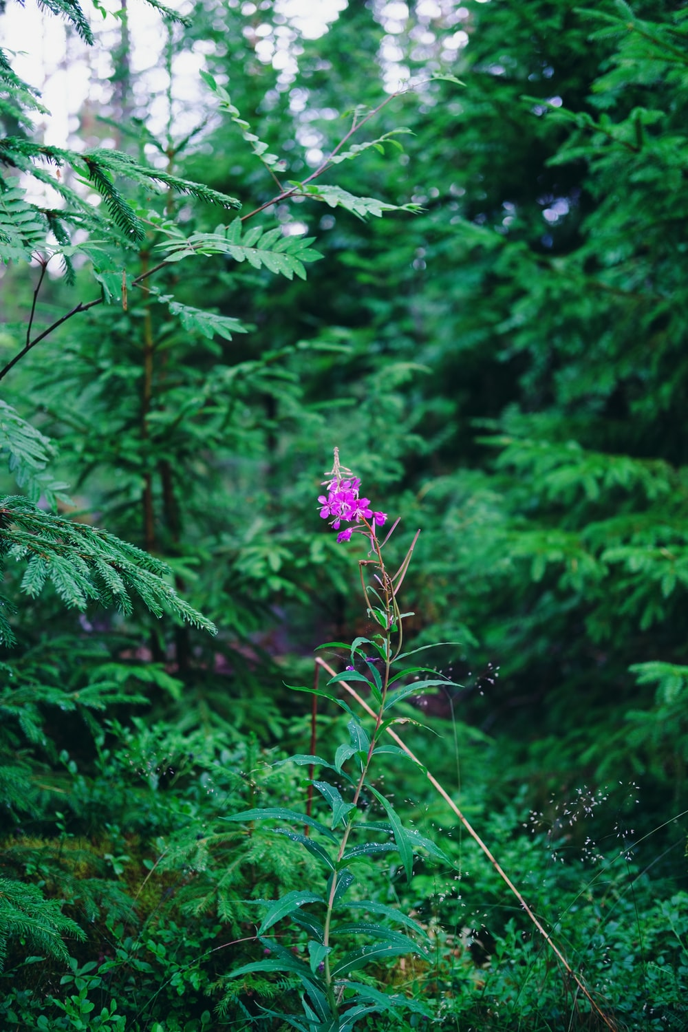purple flower in the forest