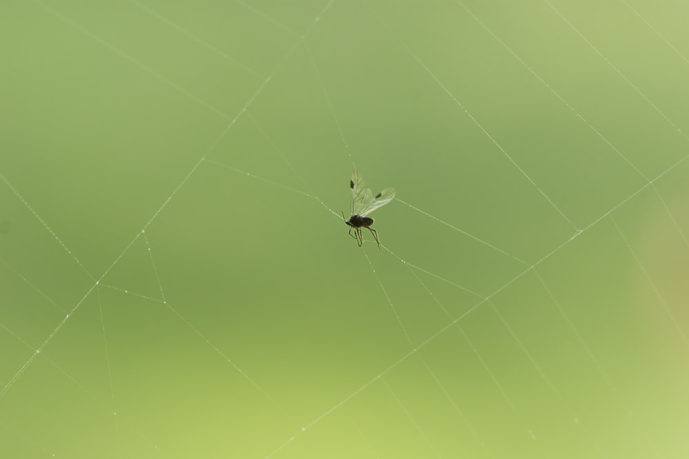 white spider on yellow spider web in close up photography