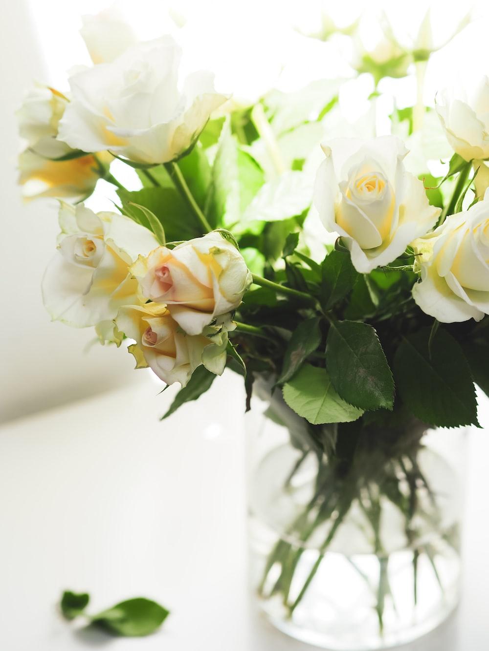 white roses in white vase