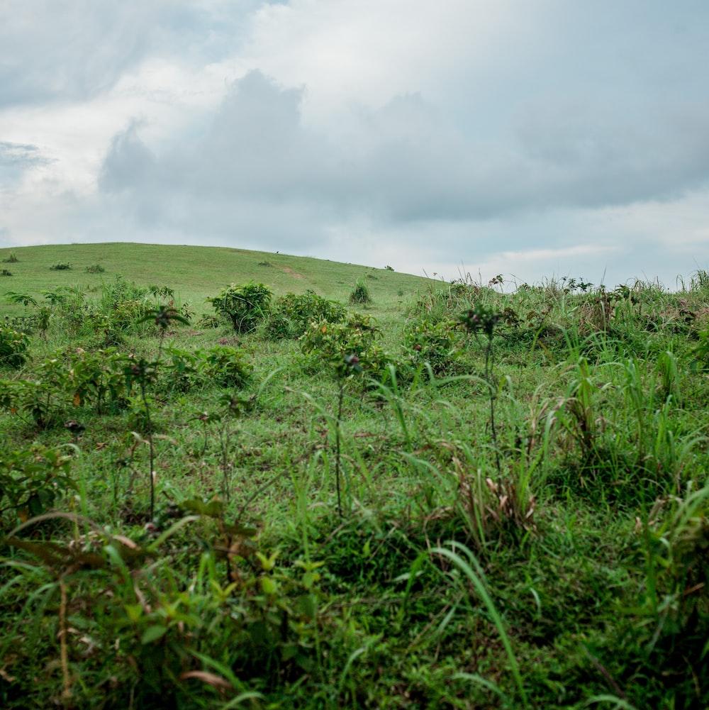 green grass field under white clouds during daytime